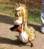 Giraffe Dog Suit