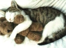 Cats Teddy