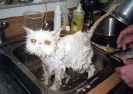 Soapy Kitteh Not Happy