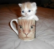 Two Faced Kitteh