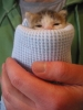 Wrapped up Kitteh