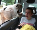 Donkey vs Kid
